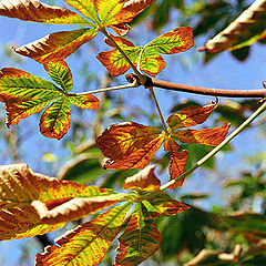 "photo ""Autumn with AGFA 2"""