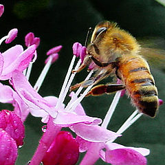 "photo ""Worker Bee Working"""