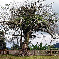 """фото """"OKA Tree"""""""
