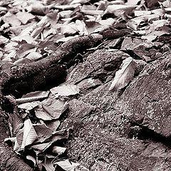 """фото """"Nature (#2)"""""""