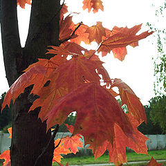 "фото ""autumn contrasts"""