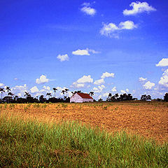 "фото ""Tobacco Plantation in Cuba"""