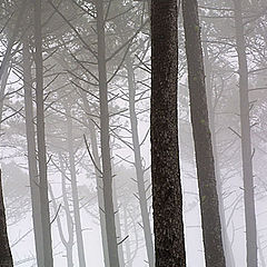 "фото ""foggy morning"""