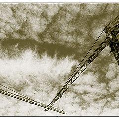 """photo """"Cranes"""""""