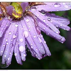 """photo """"Rain`s brilliants"""""""
