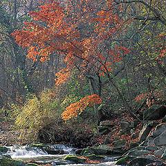 """фото """"Осень в Приморье"""""""