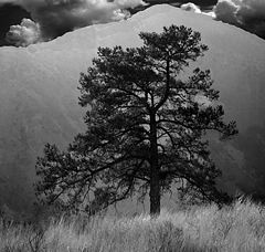 "фото ""Solitary Tree"""