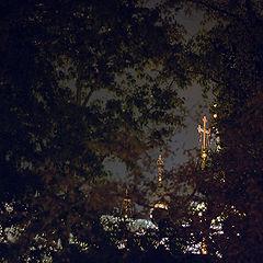 """фото """"Свет за деревьями"""""""