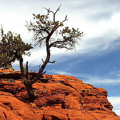 "фото ""Red Rock High"""