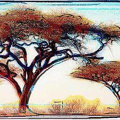 """photo """"Trees of The Savanne, Kenya"""""""