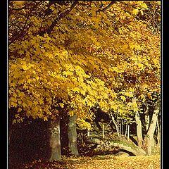 "фото ""Golden October"""
