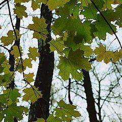 "photo ""Autumn comes"""