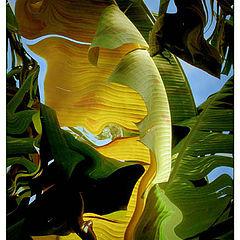 """фото """"Banana Leaf Abstract"""""""