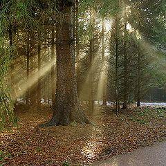 "photo ""The hidden sun.."""