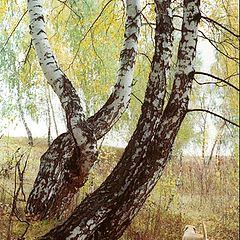 """фото """"Осенние зарисовки #1"""""""