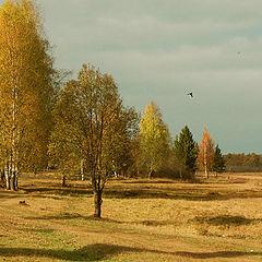 """photo """"Banal landscape"""""""