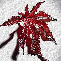 "photo ""The leaf"""