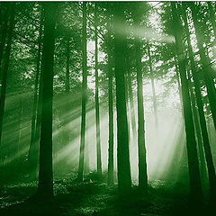 "photo ""Green Planet"""