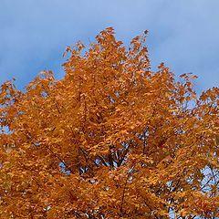 "фото ""Tree in the sky..."""