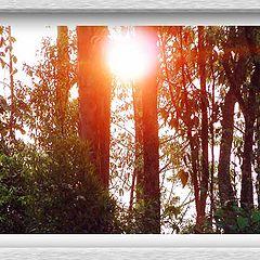 "фото ""Sun`s Power"""