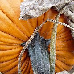 "фото ""Ripe Pumpkin"""