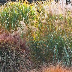 "фото ""Colorful Grasses"""