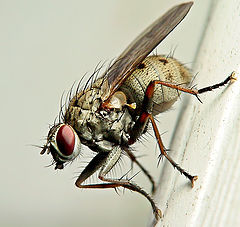 """photo """"Fly on the Wall"""""""