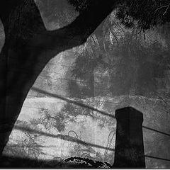 "фото ""Night in Zymi 2"""