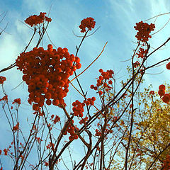 """фото """"Autumn: Red On Blue"""""""