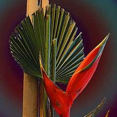 "фото ""Tropical Flower"""