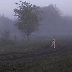 """фото """"""""Туманное настроение"""""""""""