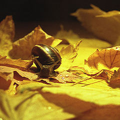 """photo """"snail in autumn"""""""