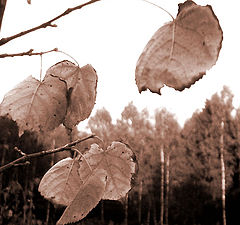 """фото """"the autumn is close"""""""
