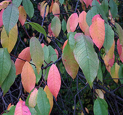 "фото ""color leafs"""
