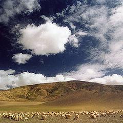 """фото """"В горах Тибета #2"""""""