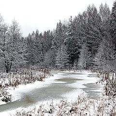 """фото """"Лесной ручей, ноябрь..."""""""