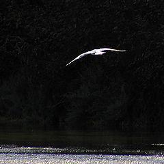 "фото ""Flying in the dark one"""