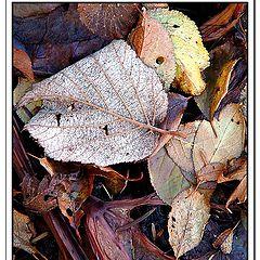 "фото ""The colour of autumn"""