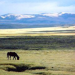 """фото """"В горах Тибета #4"""""""