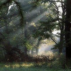 """фото """"Просвет среди деревьев"""""""