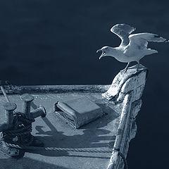 """фото """"An angry sea gull"""""""