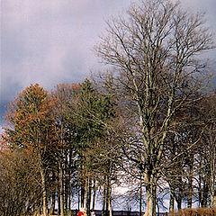"photo ""autumnal etude"""