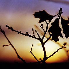 """фото """"Закат сквозь лес"""""""