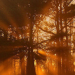 """фото """"Light in the Forest"""""""
