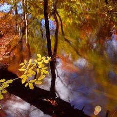 """фото """"Fall"""""""