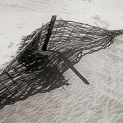 """фото """"Жизнь в песках #4"""""""