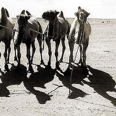 """фото """"Жизнь в песках #5"""""""