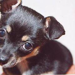 "photo ""Brutus The Killer Dog"""