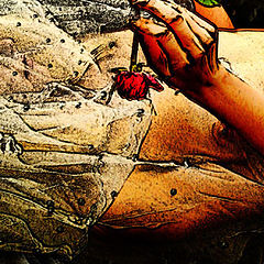 "фото ""The Last Rose"""