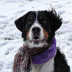 """фото """"Snow Dog 2"""""""
